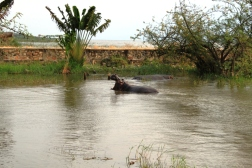 Breakfast with Hippo - Bujumbura BURUNDI