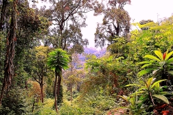 Nyungwe Forest - Rwanda
