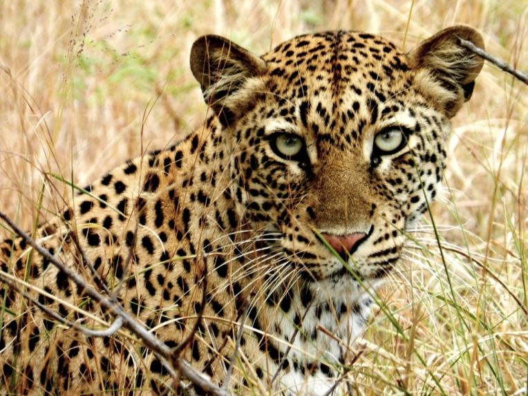 Me&leopard - Akagera National Park /Rwanda