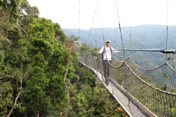 Canapy Walkway - Nyungwe forest