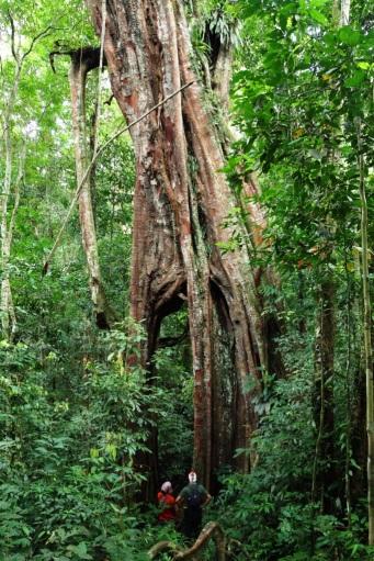 Gunung Leuser - Sumatra