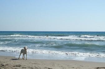 Patara Beach - Turkey
