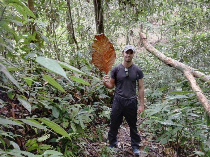 welcome to the jungle - Gunung Leuser / Sumatra